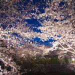 大人の春デートにぴったり!関東の夜桜名所スポット15選